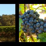 Autumn in Tuscany at Tenuta Fanti Winery in Montalcino
