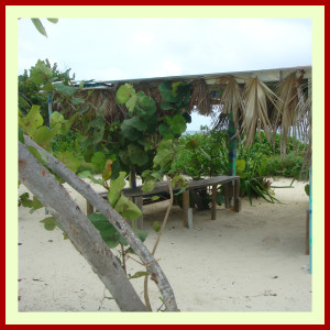 Cayman Island 4x4 Adventure