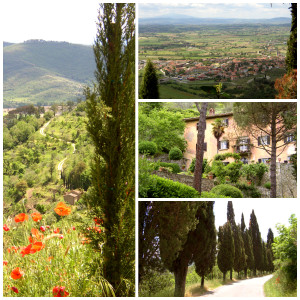 Cortona Countryside