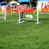 Agility Trials in Long Island, NY (part 1)