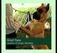 Dog Show in Long Island, NY (part 1)