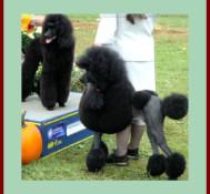 Dog Show in Long Island, New York